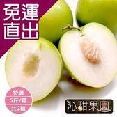 沁甜果園SSN. 特選蜜棗(5台斤/箱)(共2箱)【免運直出】