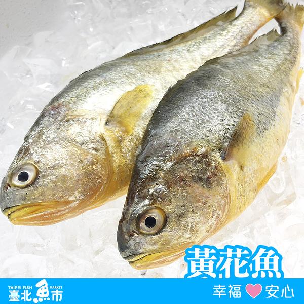 ◆ 台北魚市 ◆ 黃花魚 ( 黃花 黃魚 ) 420g