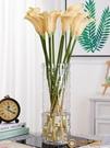 落地富貴竹花瓶擺件玻璃透明水養水培直筒插花裝飾【小獅子】