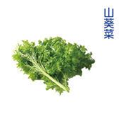預購 水耕蔬菜-山葵菜(150g)