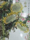 【書寶二手書T2/收藏_ZJZ】北京翰海2016春季拍賣會_小雅觀心-插畫宣傳畫及油畫雕塑_2016/6/4