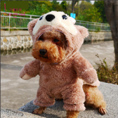 巴黎彩虹 達菲熊站立變身裝 狗衣服 貓狗冬季溫暖衣物 吉娃娃貴賓雪納瑞瑪爾濟斯 小型狗衣 現+預