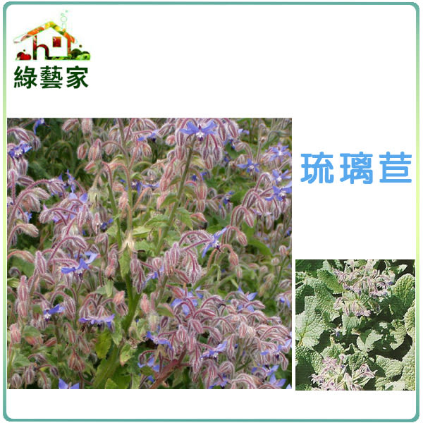 【綠藝家】K11.琉璃苣種子40顆
