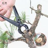 盆景球節剪球鉗盆栽樹瘤樹節修剪鉗專業園藝花藝制作造型養護工具 js10823『miss洛羽』