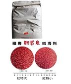 [ 台中水族 ] 福壽觀賞魚紅20KG(四海料)-特小 特價 錦鯉.各種觀賞魚可用