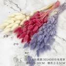 日本進口大地農園 42060 迷你兔尾草...