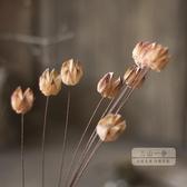 乾燥花 【含笑果單支】藝術干花干果家居會所裝飾花藝花瓶插花花束搭配-快速出貨JY