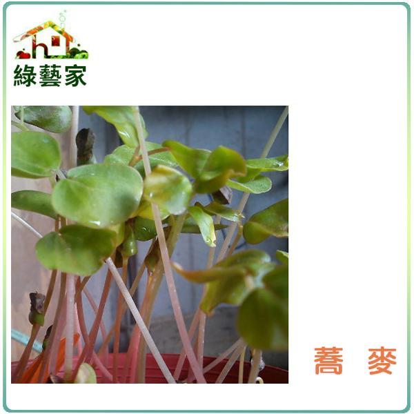 【綠藝家】大包裝蕎麥芽種子700公克(蕎麥芽菜種子)