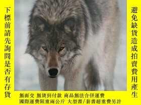 二手書博民逛書店Wolves罕見(Wildlife Collection)Y19