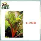 【綠藝家】A41.紅火焰菜種子100顆 ...