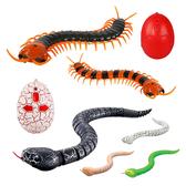 【888便利購】紅外線遙控仿真嚇人動物(青竹絲/響尾蛇/蜈蚣)(授權)