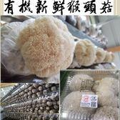 有機新鮮猴頭菇300g x3盒免運組