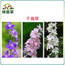 【綠藝家】H25.千鳥草(混合色,高90~120cm)種子35顆