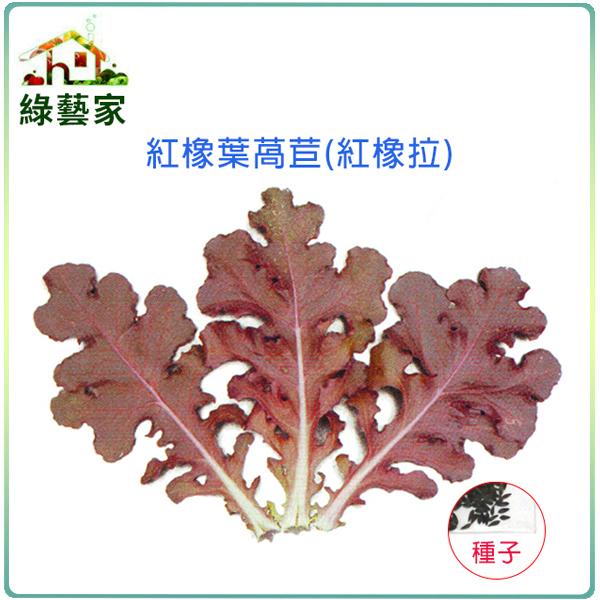【綠藝家】A79.紅橡葉萵苣種子500顆(紅橡拉)