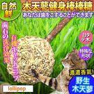 【培菓平價寵物網】自然鮮系列》木天蓼健身棒棒糖貓玩具NF-022