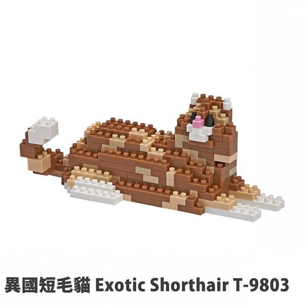 【Tico 微型積木】T-9803 異國短毛貓 Exotic Shorthair