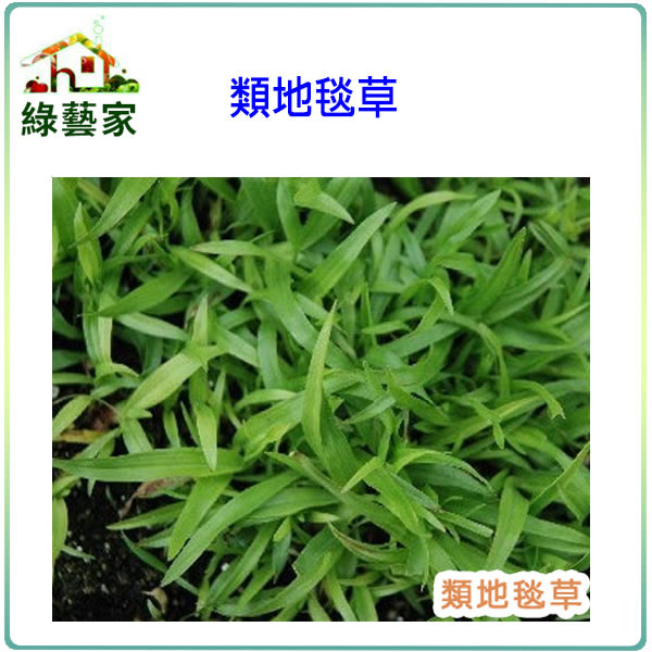 【綠藝家】類地毯草種子1公斤裝