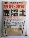 日本 硬質鹿沼土 適合多肉植物 土壤改良 酸性植物 高級園藝用土 大包裝 - 小粒