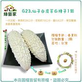 【綠藝家】G23.仙子白皮苦瓜種子1顆