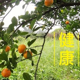愛媛桔日本蜜柑 2月水果花蓮栽種自然農法 8斤 過年年終春節禮盒