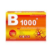 活力B1000+ 高單位綜合B群 60顆【瑞昌藥局】015144