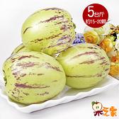 【果之家】澎湖特級楊梅果(人參果)5台斤1箱(約15-20顆)