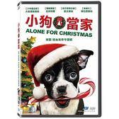 小狗當家 DVD Alone for Christmas 免運 (購潮8)