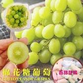 【果之蔬-全省免運】美國加州棉花糖葡萄X1盒(每盒500g±10%)