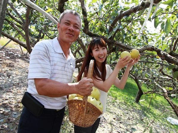 [宜蘭]採果體驗-錦普觀光果園〔桑椹、高接梨、金棗、金桔、柑橘、芭樂〕