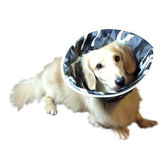 Fancy Pets 防護頸套(酷炫迷彩)