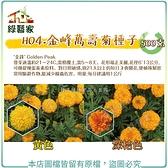 【綠藝家00H04-2】H04.金峰萬壽菊種子500克