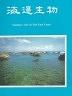 二手書R2YB81年10月初版《海邊生物》曾晴賢 交通部觀光局