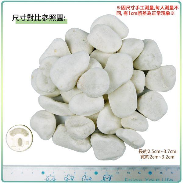 【綠藝家】極白石 5分 1公斤分裝包 (漢白玉.特白石.鵝卵石.白卵石)