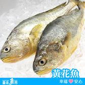 【台北魚市】 黃花魚(黃魚) 430g±10%