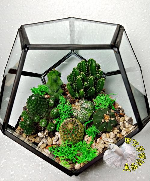 連植物整組出售! 焊接幾何造形玻璃花房 多肉植物仙人掌+乾燥花組合盆栽 送禮首選