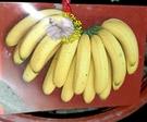 活體  可食用 北蕉 新北蕉 香蕉苗 5...