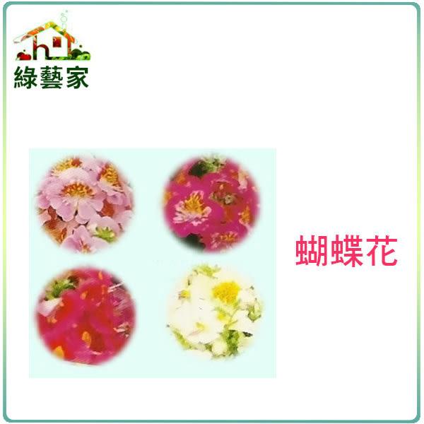 【綠藝家】大包裝H38.蝴蝶花種子(高40cm)900顆