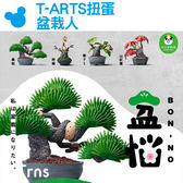 Norns【T-ARTS扭蛋 盆栽人】BON-NO盆惱 逃避煩惱 盆景人 厭世 搞怪 熊貓之穴 轉蛋