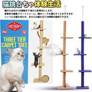 【培菓平價寵物網】  dyy》超長大型貓爬樹3way頂天豪華貓跳台