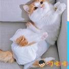 貓咪小型生理安全公貓寵物衛生避孕防交配母貓用紙尿褲【淘嘟嘟】