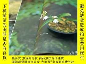 二手書博民逛書店Let s罕見start SMALL BONSAI Interior BOOK Japanese from Jap