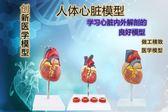尺寸兩種以上請詢問報價正品1:1人體心臟解剖模型 B超彩