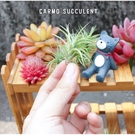 CARMO迷你紫羅蘭空氣鳳梨(單入) 空鳳【KF091】