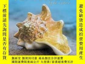 二手書博民逛書店Sea罕見Shells 2020 Wall CalendarY3