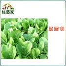 【綠藝家】A29.羅美生菜種子1500顆...