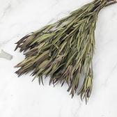 進口乾燥天然細葉木百合- 乾燥花束 不凋花 拍照道具 室內擺飾 乾燥花材 裝飾插花鄉村風-128元/束