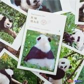 百姓公館 攝影明信片 套裝 熊貓便利店 可愛大熊貓 明信片