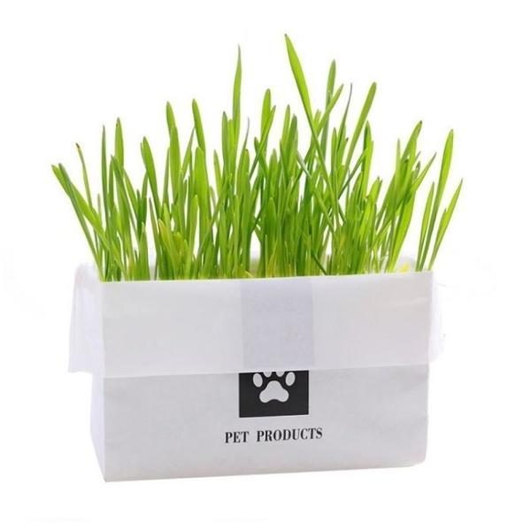 *WANG*PET PRODUCTS《無土植栽貓草袋》環保無農藥栽培 加水即可