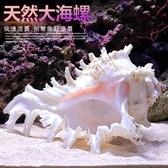 特賣魚缸擺件天然海螺貝殼魚缸水族箱造景裝飾大小號貝殼海底世界擺件躲避屋
