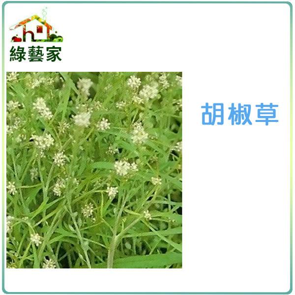 【綠藝家】大包裝K17.胡椒草種子1600顆